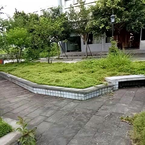 这里是长寿区葛兰镇卫生院,杂草丛生,环境卫生极差。