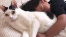 猫: 不敢动,可是睡不着