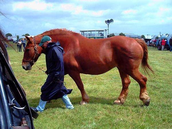 马肌肉坚实,线条漂亮,被认为是动物王国中最具耐力的跑步者之一!