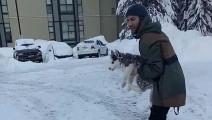 被扔进雪里的小狗,调皮的扑向了镜头