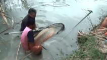 实拍小伙野外芦苇丛捕捞大鱼,险些被大鱼掌掴