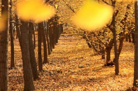 金色风景微信头像图片