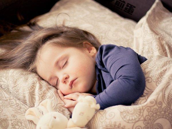 我们为什么要睡觉, 或者是为了遗忘
