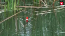 钓鱼: 玉米粒钓鲫鱼,是否可行?