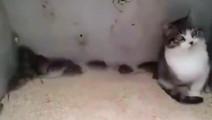 你见过和一群老鼠做朋友的猫吗?