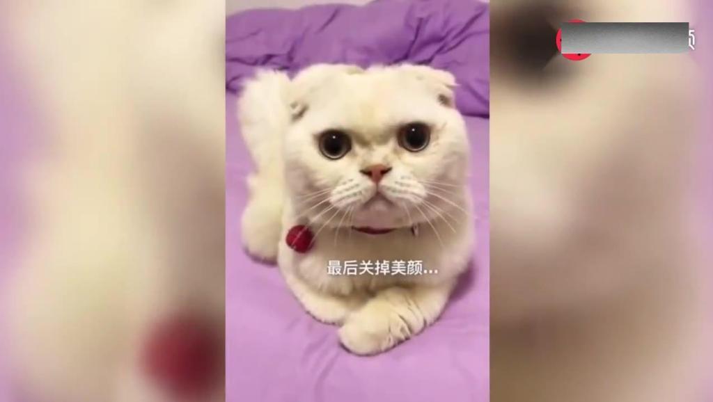 主人给喵星人拍视频 当关掉美颜和滤镜 喵星人怀疑猫生了!