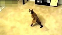 搞笑动物视频集锦: 一看就知道这是一只会武功的猫!没事别惹它!