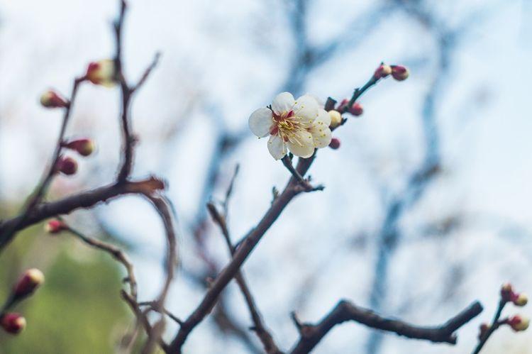 11月份感情顺起来, 桃花在眼前的三个生肖, 有望喜逢真爱喜脱单