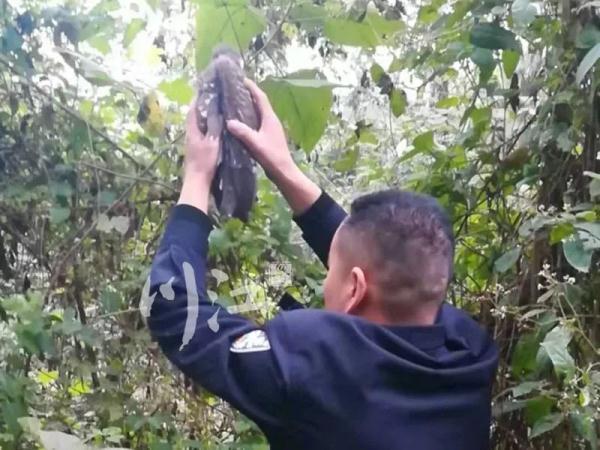 """派出所来了一只受伤的怪鸟, 泸州民警瞬间化身""""奶妈"""""""