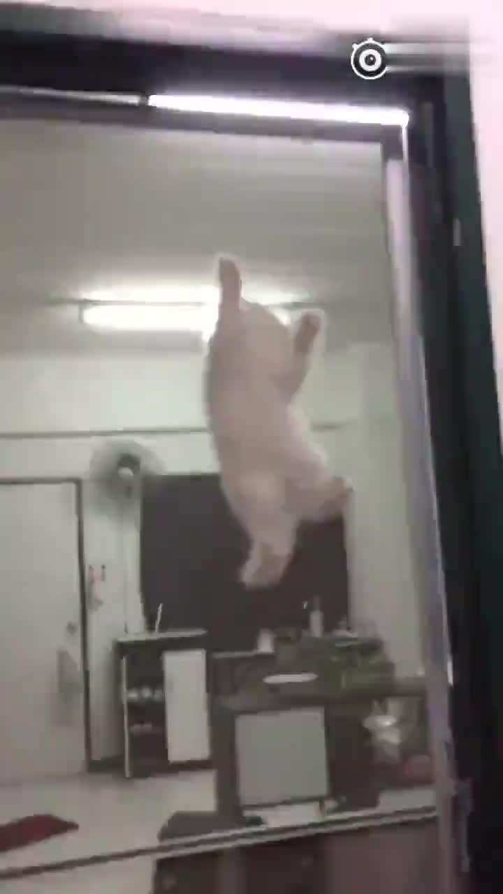 泰国一位网友为了证明养了一只蜘蛛猫,于是拍了这段视频
