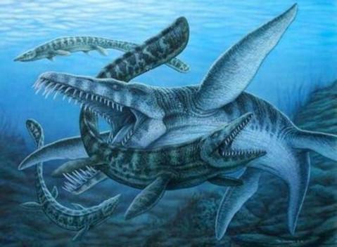 上龙是海洋食物链的最顶端的存在,乃当之无愧的海洋霸主,无动物能与