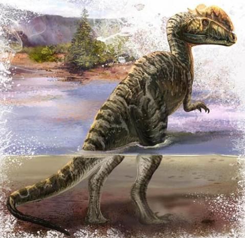 古生物学家曾经认为双脊龙会以小型动物或者死亡的动物为食,但是脚印