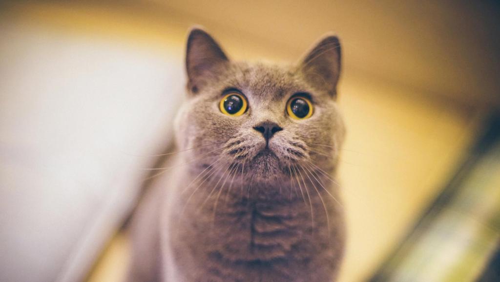 朋友说这样带小猫咪出门方便
