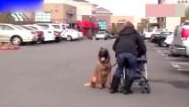 人贩子当街抢婴儿,狗狗为救小主人咬住人贩子不松口