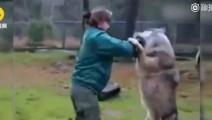 和俄罗斯美女打了一架之后,这只狼从此改名叫哈士奇!