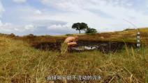 德哥这次来到了非洲草原,对决寡妇制造者,直接喝泥水!