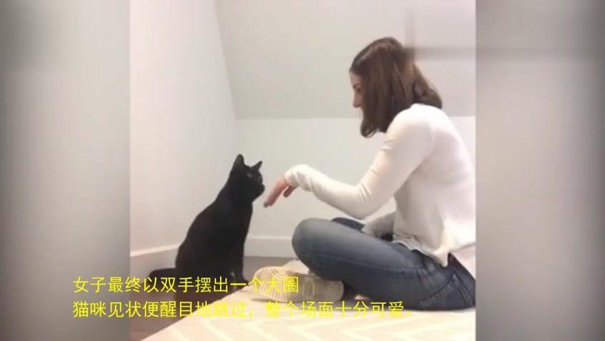 可爱猫咪和主人玩小手拍拍合拍做不同指令