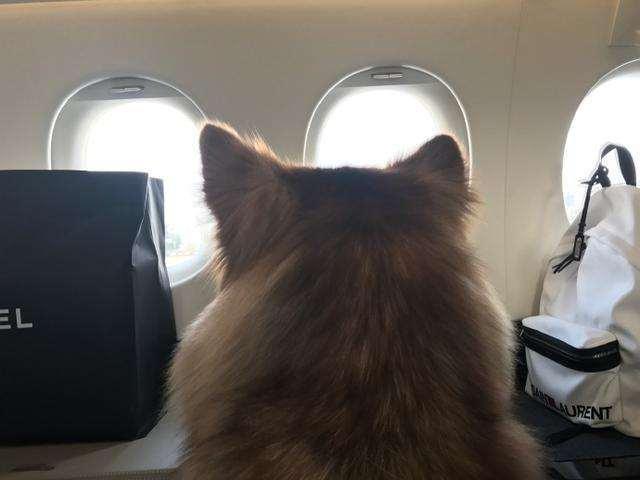 > > 正文   按理来说,小宠物是需要办理托运呆在有氧舱里才可以上飞机