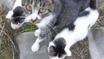 这才是真正的撸猫达人,猫妈妈被摸超级舒服带了小猫一起求撸