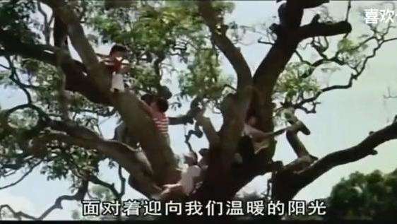 《浮萍》罗大佑词曲,80年代台湾最红男歌星刘文正演唱