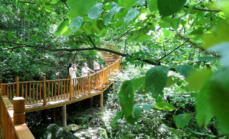 生态木制栈道,全长680米,连接着宝天曼自然保护区的宣教室,森林气象站