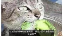 猫咪吧家里价值上千的绿蜥蜴给捕杀了,主人无奈选择原谅