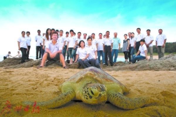 绿海龟别名海龟,绿蠵龟,因其长期进食海中的海藻,体内的脂肪呈淡绿色