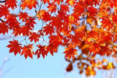 本溪关门山的枫叶红了 - 微信奴