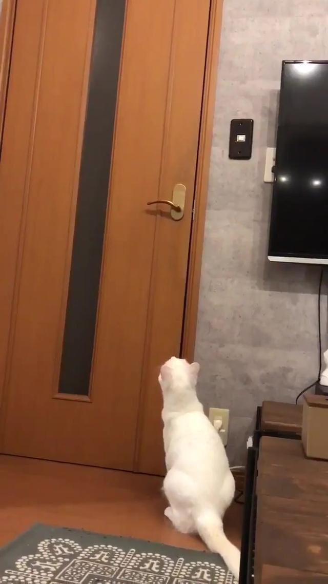 白猫黑猫,会开门的绝对是只聪明的猫!
