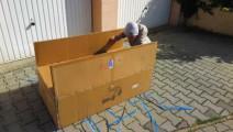 3岁小孩网购一台玛莎拉蒂SUV到货了,打开盒子后才霸气才刚刚开始