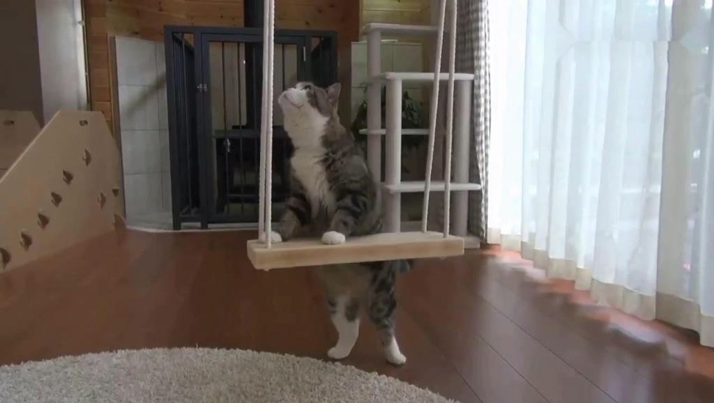 猫咪学会荡秋千后,待在上面怎么也不愿意下来了,一副高贵的样子