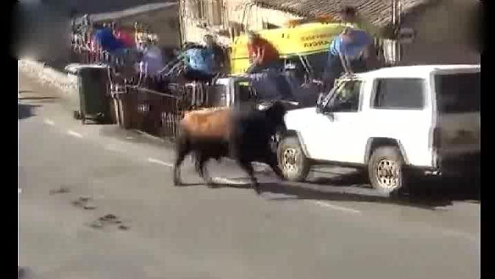 公牛发疯冲向公路,直接顶翻汽车,轮胎立马爆开