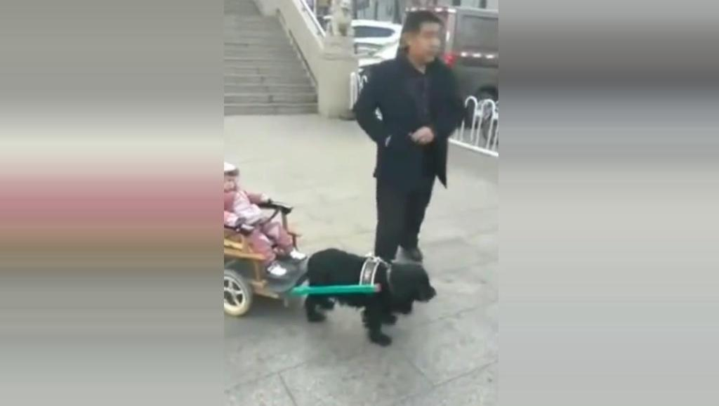 大爷真是奇才,带娃遛狗两不误,佩服!