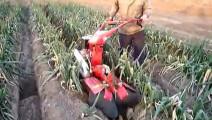 国内研发的开沟培土机,给大葱培土