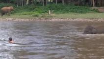 小伙溺水差点要身亡,岸边小象立刻跳进河中救人