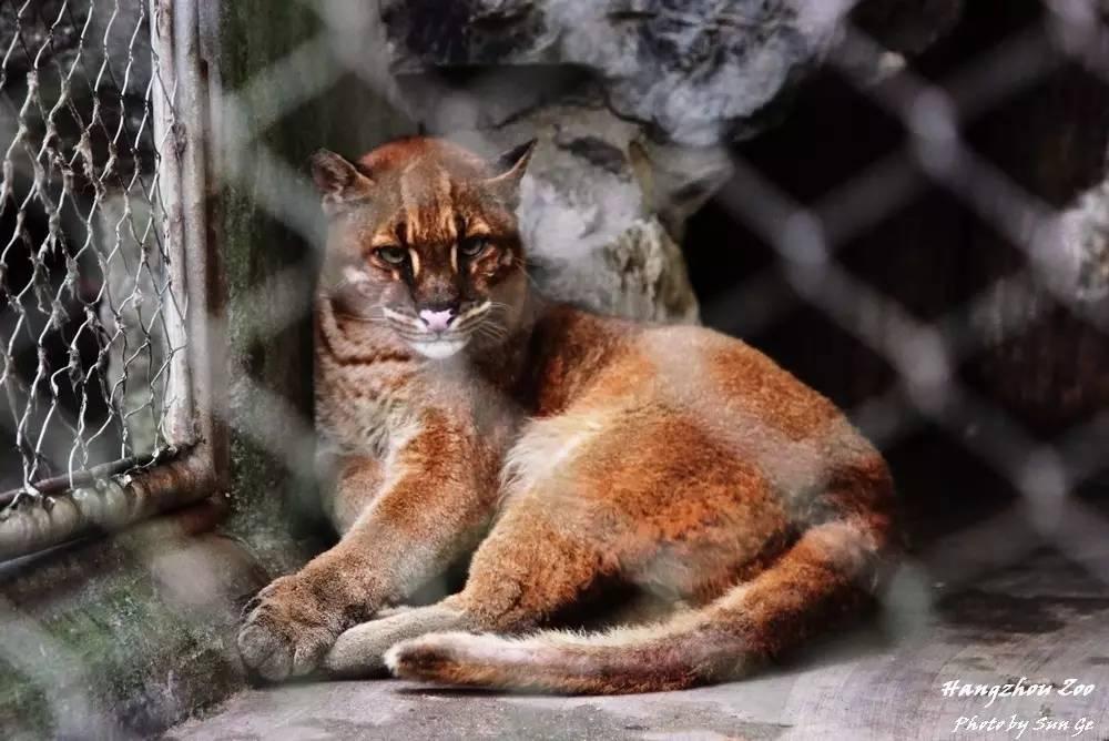 2010年摄自新加坡夜间野生动物园.