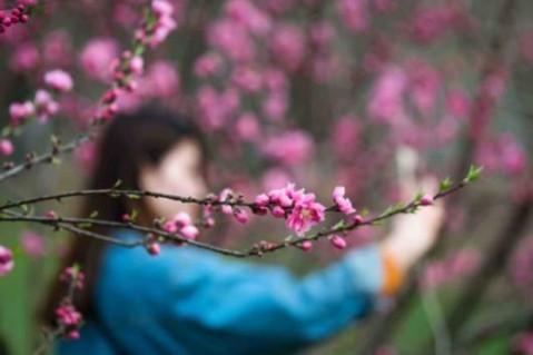 上海都市森林百花展进入最佳观赏期 各花旦美翻天