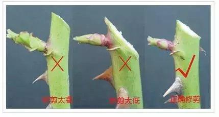 图解花卉的修剪方法! 简单明了!