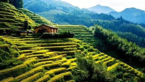 吉安农村风景水墨画