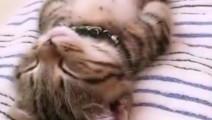 瘫睡在床上的喵星人!不管你怎么调戏都会恢复原样……可以说是一个非常合格的猫饼了!