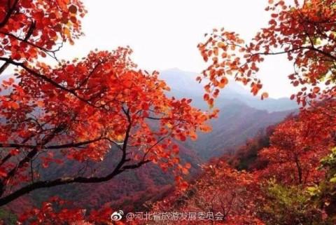 河北仙台山风景区的红叶面积是北京香山20倍 当属华北