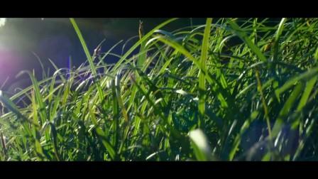 打开 超清实拍大自然各种动物鸟类视频素材 打开 sphj-492-大自然绿色