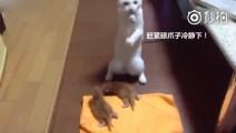 我第一次当妈,完全不知道怎么办,整个猫生都崩溃了。