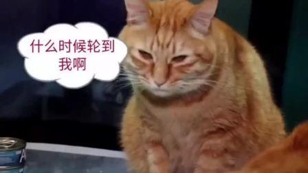 亚米亚米AC机能成猫罐头泰国进口金枪鱼海鲜猫罐猫湿粮70g