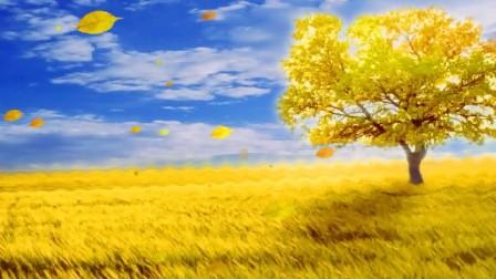 打开 s68 金色田野 大树落叶风吹飘落秋天季节led动态背景视频素材