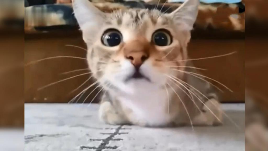 电锯用头像记录了一场表情恐怖片,这表情真情侣包跪下表情猫咪图片