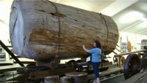 强大的木材加工机械,再粗的木头也切给你看!