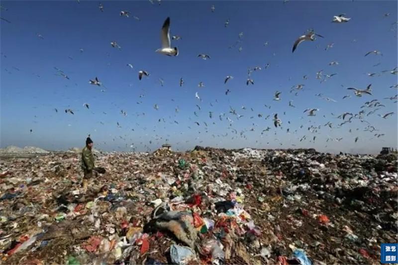 毛茔子垃圾填埋场污染海洋环境, 拾荒者一天收入最多五六十元