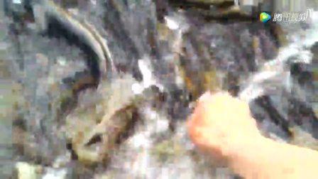 这里的鱼很多几乎铺满了河床, 但是不能抓, 每个钓鱼人都知道