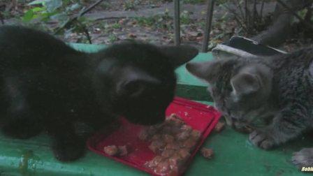 强行喂猫咪吃辣椒,猫猫辣的一直吐舌头,萌可爱